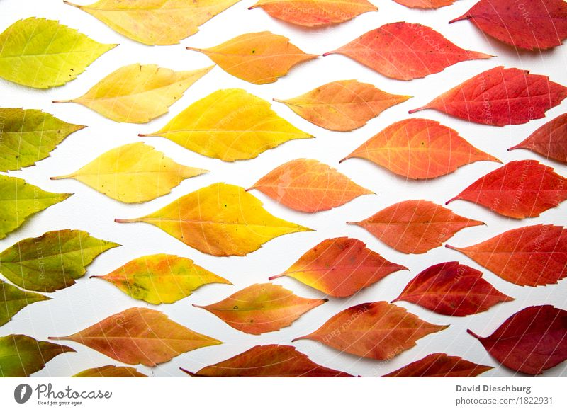 Color of autumn Nature Plant Autumn Beautiful weather Leaf Multicoloured Yellow Green Orange Red Landscape format Structures and shapes Background picture