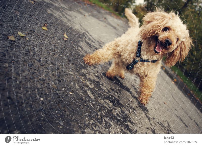Dog Nature Joy Animal Environment Playing Emotions Freedom Happy Funny Moody Going Contentment Leisure and hobbies Happiness Cool (slang)
