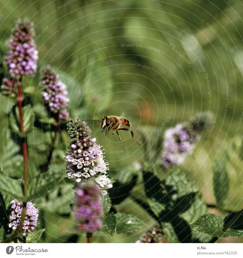 Nature Green Plant Animal Emotions Park Landscape Environment Flying Free Violet Wing Natural Pelt Bee Wild animal