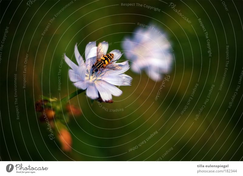 Nature Green Plant Summer Flower Animal Blossom Wild animal Wild Natural Trip Idyll Violet Blossoming Discover Honey