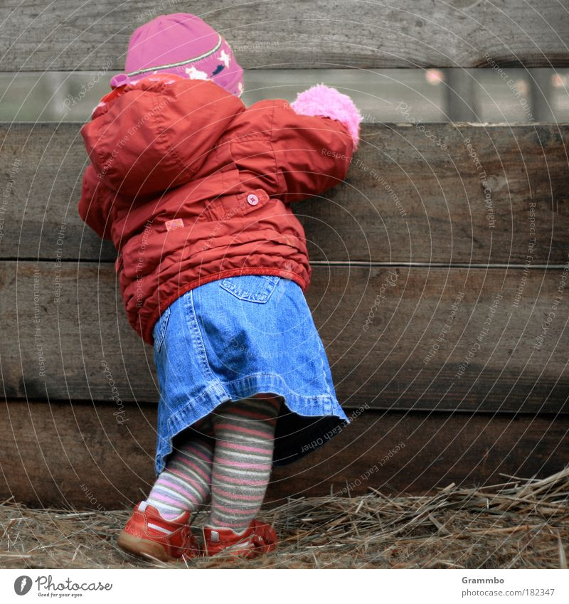 inquisitiveness Colour photo Multicoloured Exterior shot Copy Space right Human being Toddler Girl Infancy 1 1 - 3 years Village Jacket Tights Cap Looking Cute