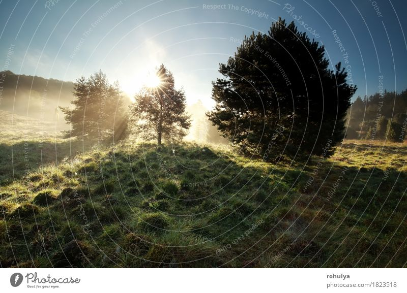 sunbeams through pine trees on misty hills Sky Nature Summer Green Sun Tree Landscape Meadow Grass Germany Fog Vantage point Hill Pine