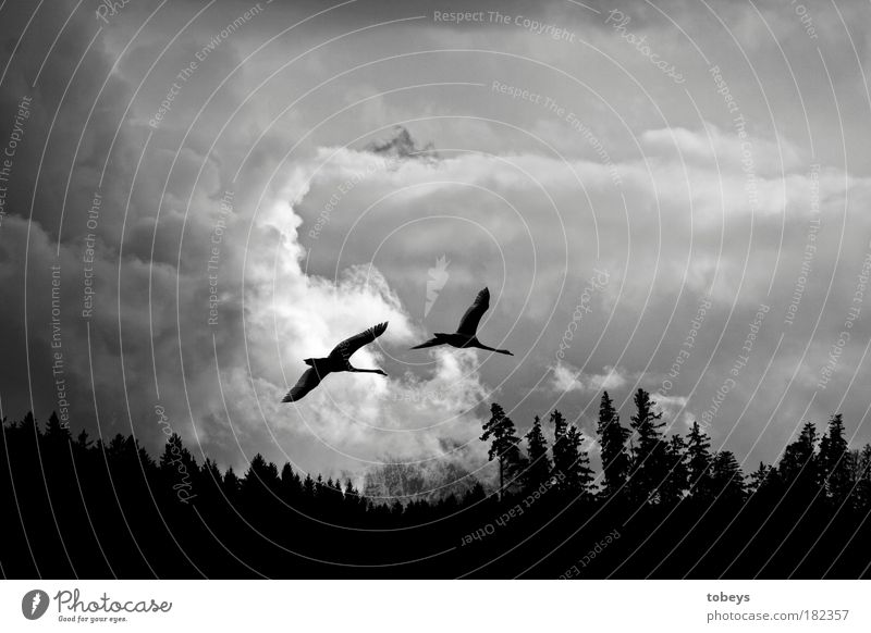 Nature Vacation & Travel Clouds Far-off places Forest Cold Freedom Flying Bird Moody Together Friendship Aviation Pair of animals Threat Adventure