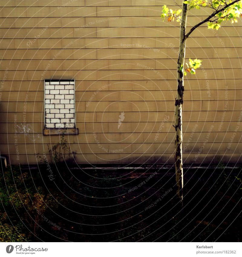 wall. window. Lifestyle Design House (Residential Structure) Construction site Tree Bushes Leaf Town Outskirts Ruin Manmade structures Building Wall (barrier)