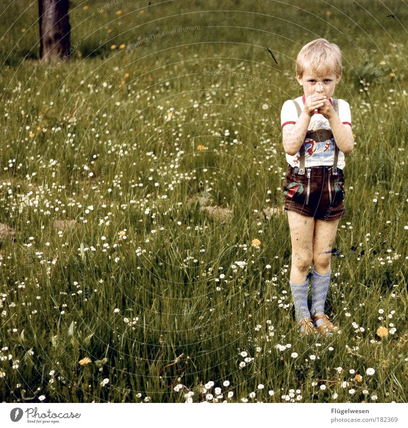The day the meadow stopped. Colour photo Exterior shot Day Lifestyle Leisure and hobbies Parenting Human being Child Boy (child) Plant Grass Blonde Cool (slang)