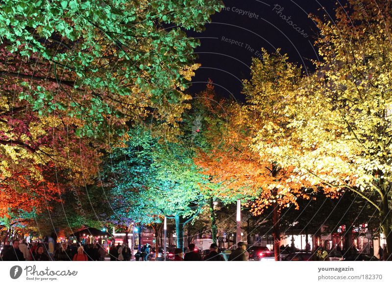 under the lime trees Colour photo Exterior shot Twilight Night Long shot Nature Sky Autumn Winter Tree Cold
