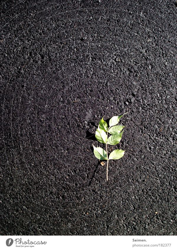 Nature Green Beautiful Plant Leaf Loneliness Street Life Gray Lie Broken Perspective Grief Transience Past Pain