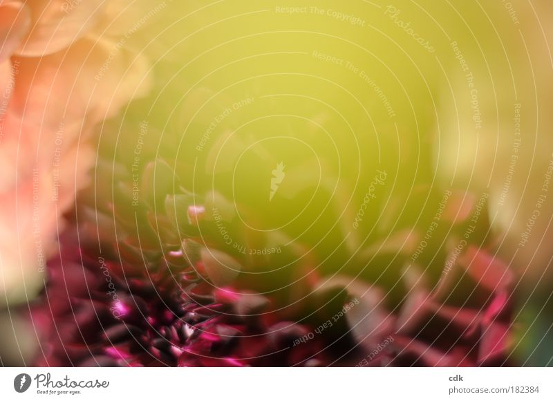 nostalgia Colour photo Exterior shot Detail Structures and shapes Deserted Copy Space top Blur Shallow depth of field Nature Plant Autumn Blossom Fragrance
