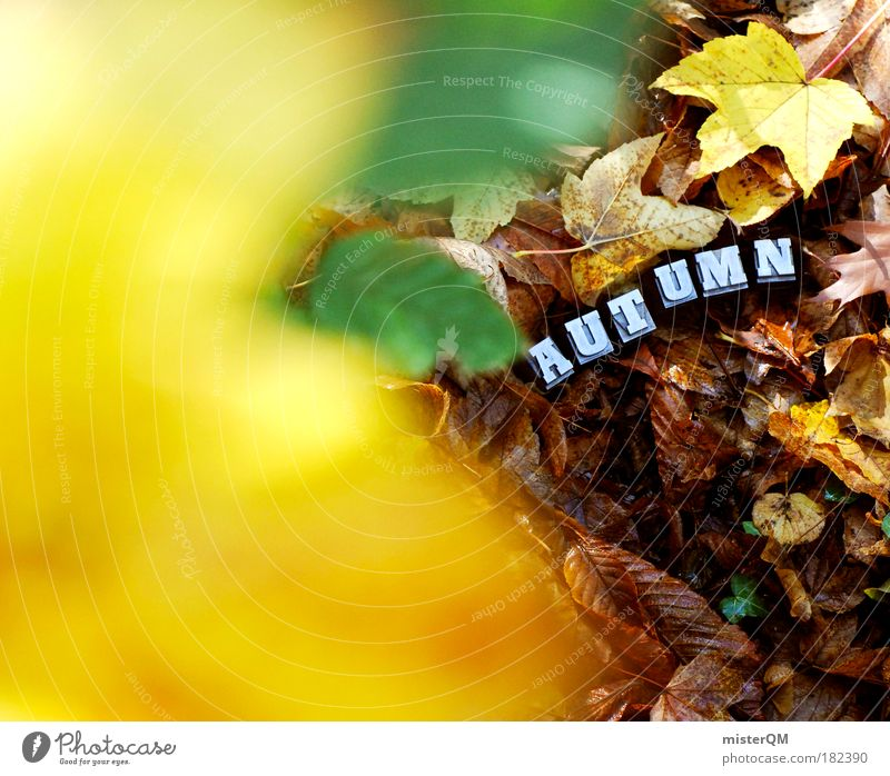 Nature Leaf Yellow Autumn Art Brown Characters Esthetic Ground To go for a walk Letters (alphabet) Search Sign Seasons Hide Autumn leaves