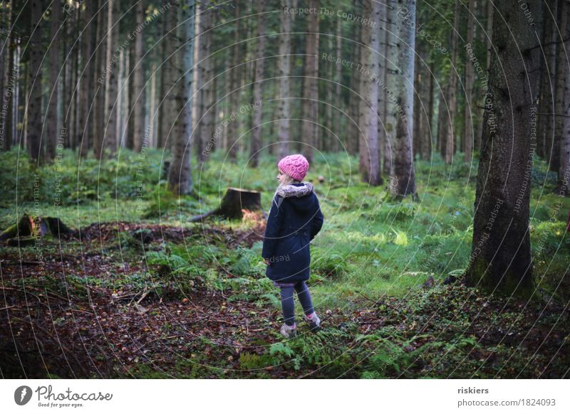 forest child Human being Feminine Child Girl Infancy 1 3 - 8 years Environment Nature Autumn Forest Observe Discover Relaxation Looking Dream Hiking Blonde