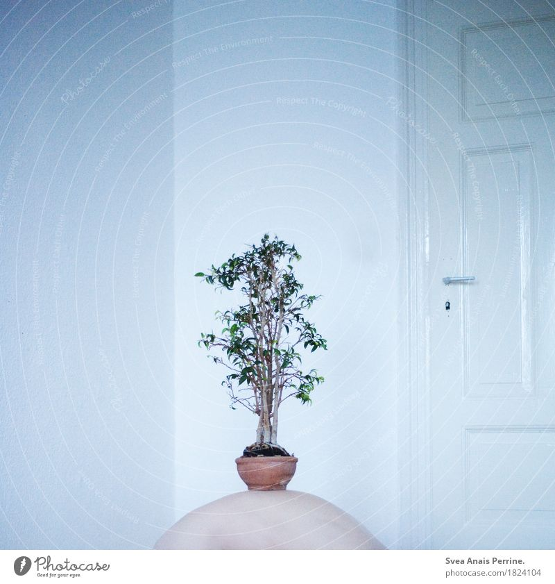 Human being Plant Loneliness Art Door Back Whimsical Houseplant