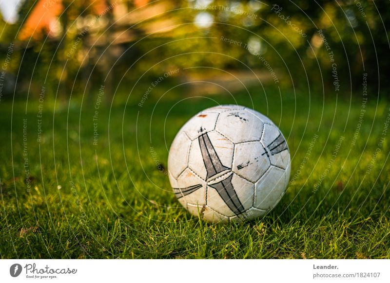 Football in the garden Athletic Fitness Sports Sports Training Foot ball Lie Playing Yellow Green Orange Adventure Soccer Garden Lawn Grass Ball World Cup EM