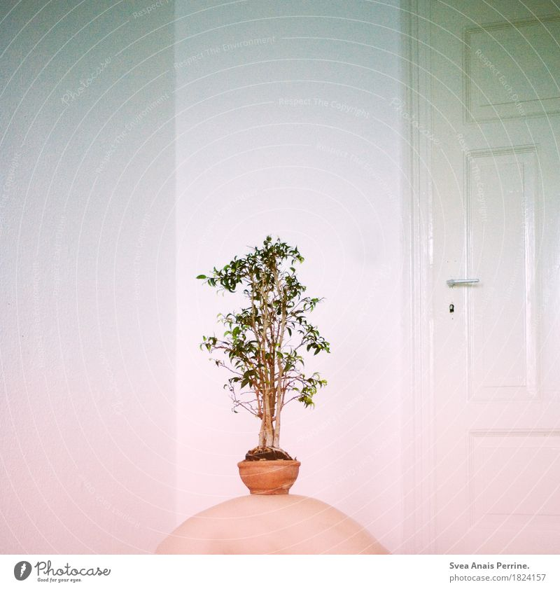 Father Earth. Young man Youth (Young adults) Body Skin Back 1 Human being 18 - 30 years Adults Door Flowerpot Plant Houseplant Blossoming Exceptional Thin Cold