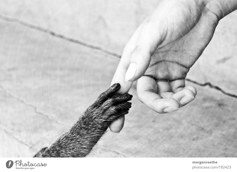 friendship Black & white photo Exterior shot Detail Contrast Shallow depth of field Human being Masculine Hand Fingers 1 Animal Paw Feeding Communicate Together