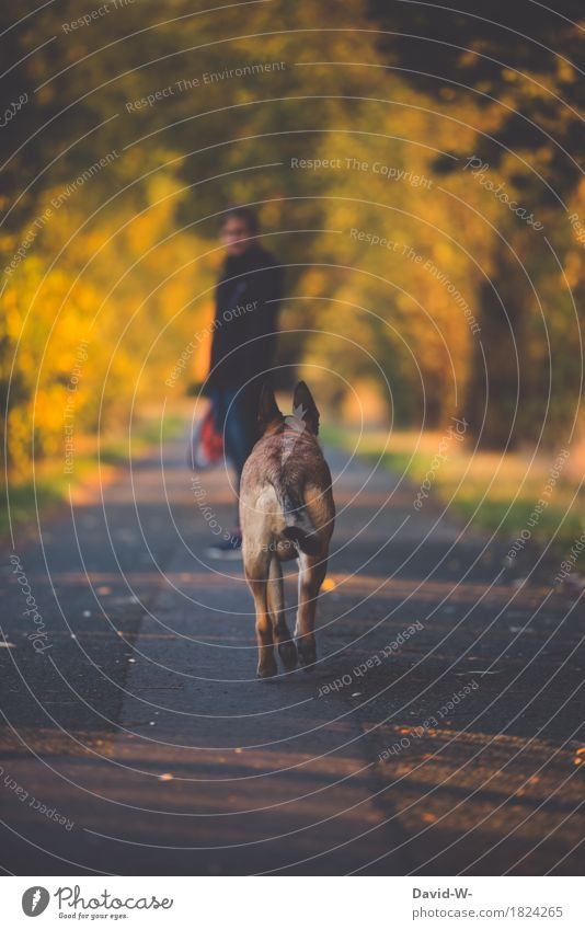 Human being Woman Dog Nature Youth (Young adults) Young woman Landscape Relaxation Animal Adults Environment Life Autumn Feminine Going Leisure and hobbies