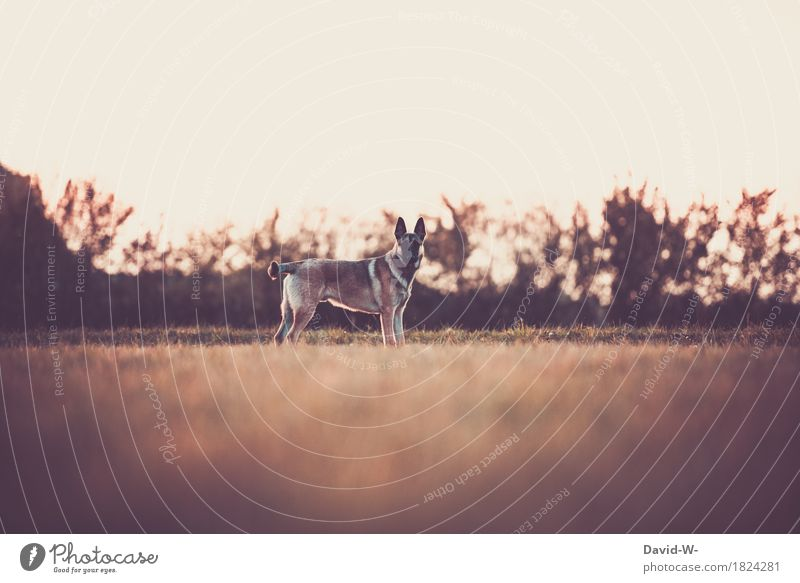 Dog Nature Summer Beautiful Sun Landscape Relaxation Animal Calm Far-off places Environment Meadow Autumn Leisure and hobbies Contentment Hiking