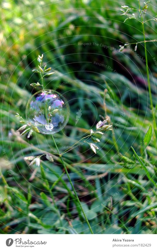 Nature Green Joy Meadow Grass Happy Dream Flying Happiness Esthetic Dangerous Round Near End Threat