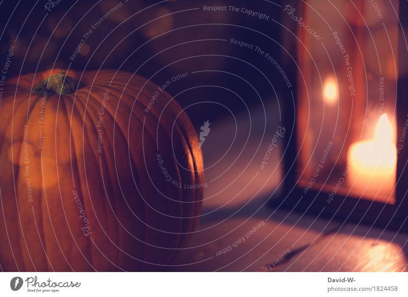 Beautiful Calm Joy Dark Environment Autumn Art Food Moody Orange Illuminate Dream Fear Elegant Culture Energy
