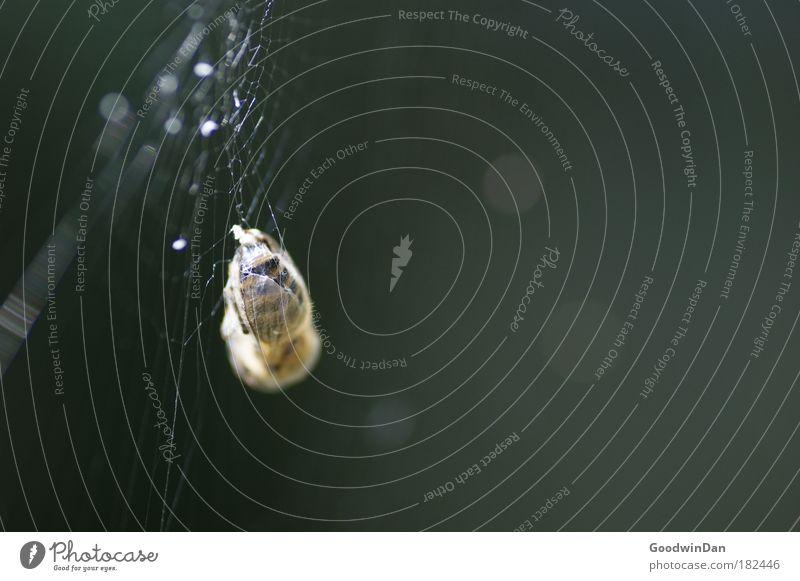 Death Bee Hang Captured Spider's web Prey Animal Mortal agony Marsupial Dead animal