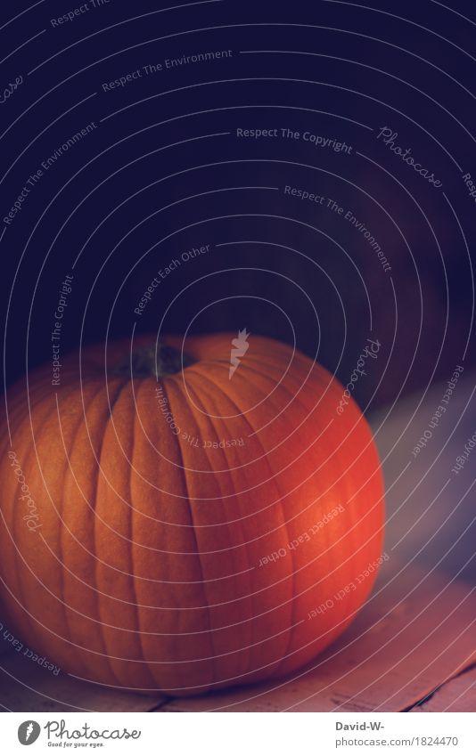 orange Feasts & Celebrations Thanksgiving Hallowe'en Culture Environment Nature Autumn Illuminate Fantastic Warmth Elegant Symbols and metaphors Pumpkin