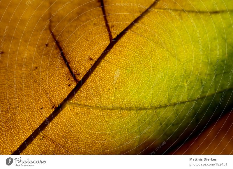 500 Leaf Autumn Macro (Extreme close-up) Structures and shapes Arrangement Rainbow Multicoloured Body cell Close-up Color gradient Diagonal Pattern Lung