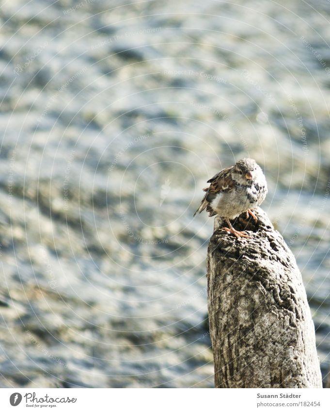 Sun Animal Bird Wait Vantage point Observe Wild animal Cute Beautiful weather Sparrow Break water Astute Wooden stake Overview Passerine bird