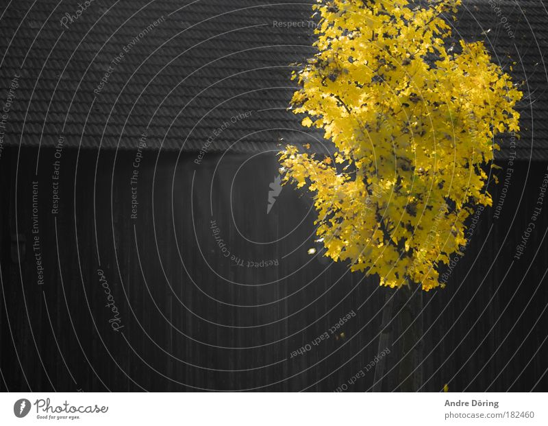 Tree Leaf Yellow Autumn Death Warmth Brown Beautiful weather Divide To hibernate