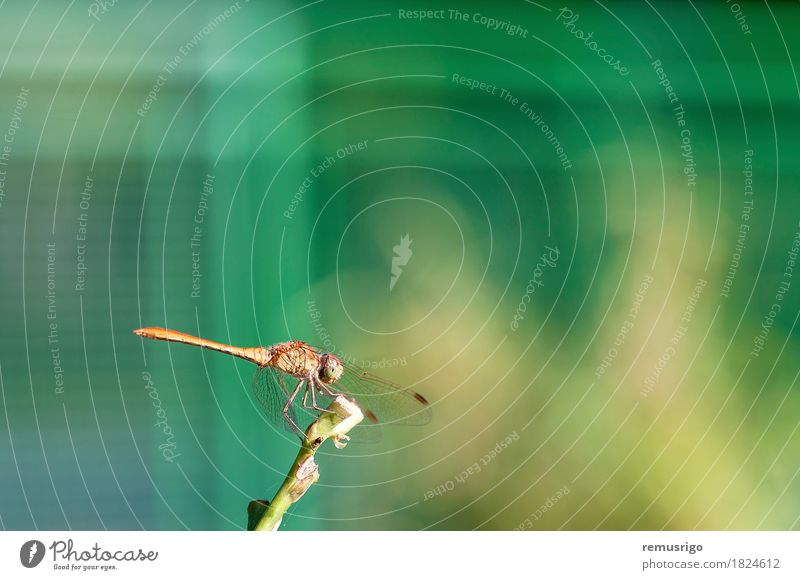 Dragonfly resting on a plant Summer Nature Plant Animal Park Wing Sit Bug eye fauna Insect Resting Colour photo Exterior shot Close-up Detail