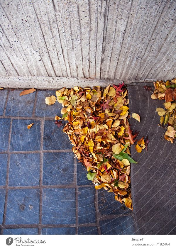 Leaf Autumn Wall (building) Environment Wall (barrier) Wind Stairs Change Infinity Mysterious Idea Old town Populated Bird's-eye view Renewal Offense