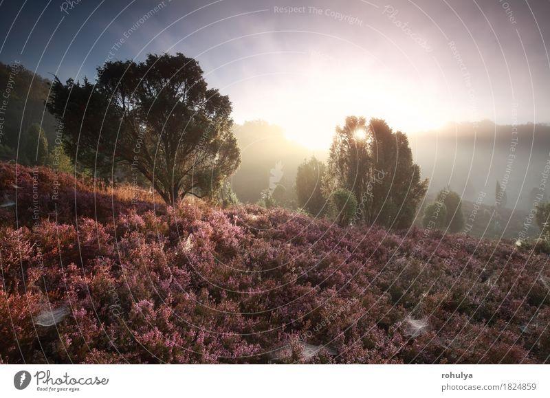 misty sunrise over hills with flowering heather Sky Nature Summer Sun Tree Flower Landscape Mountain Blossom Autumn Germany Pink Fog Vantage point Hill Seasons