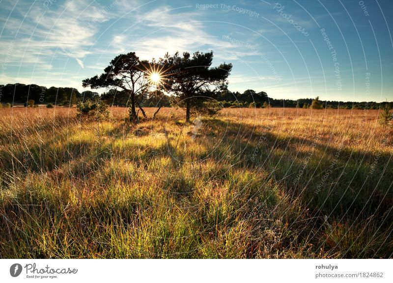 sunbeams behind pine trees on marsh Sky Nature Blue Sun Tree Landscape Meadow Grass Germany Wild Vantage point Pine Marsh