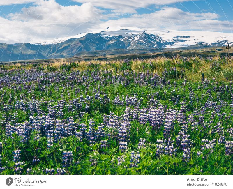 Iceland - Mýrdalsjökull Vacation & Travel Tourism Trip Adventure Far-off places Freedom Mountain Hiking Nature Landscape Plant Earth Sky Clouds Spring Summer