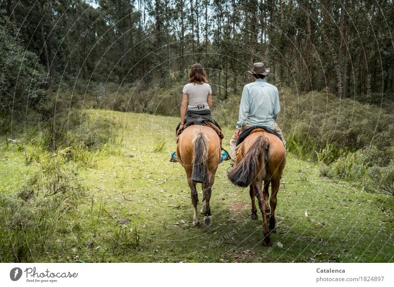 I've broken new ground. Ride Masculine Feminine Young woman Youth (Young adults) Young man 2 Human being Landscape Summer Forest Horse Grass scavenger Bushes