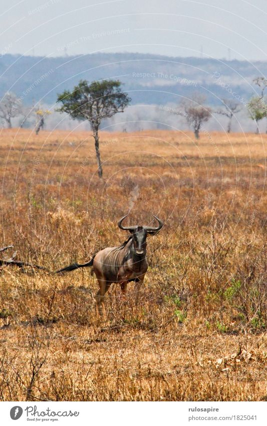 safarignu Hunting Vacation & Travel Adventure Safari Expedition Sun Environment Nature Landscape Animal Earth Horizon Drought Hill Savannah Steppe Wild animal