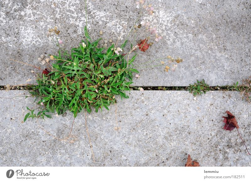 Nature Green Plant Leaf Loneliness Autumn Grass Power Environment Concrete Growth Places Natural Strong Sidewalk Detail