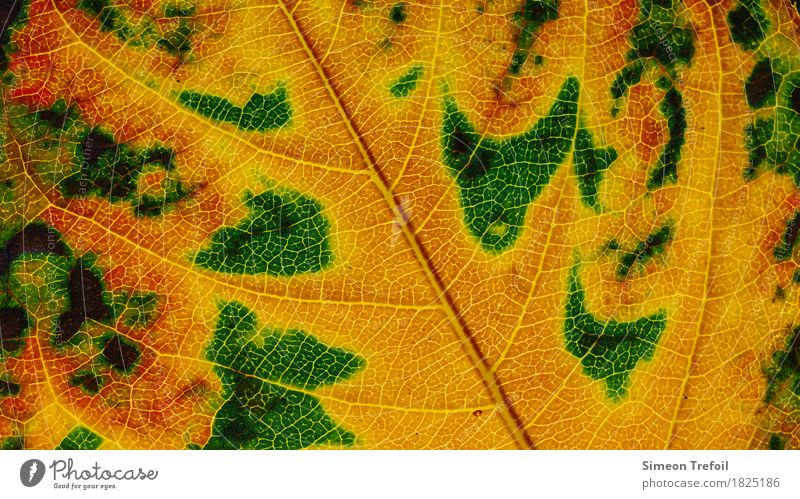 abstract landscapes Nature Plant Autumn Tree Leaf Garden Brown Yellow Green Pink Rachis Abstract Autumn leaves Autumnal Close-up Colour photo Detail