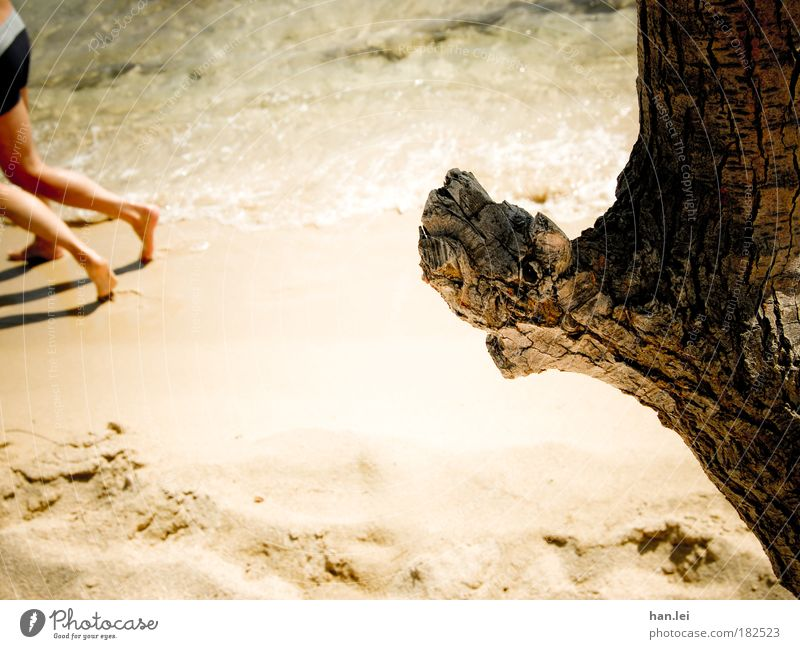 Human being Old Vacation & Travel Tree Summer Joy Beach Life Movement Sand Legs Couple Feet Power Leisure and hobbies Tourism
