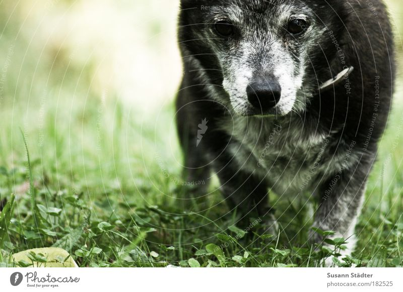 Old Plant Leaf Meadow Blossom Movement Gray Dog Park Think Going Earth Observe Pelt To enjoy Beautiful weather