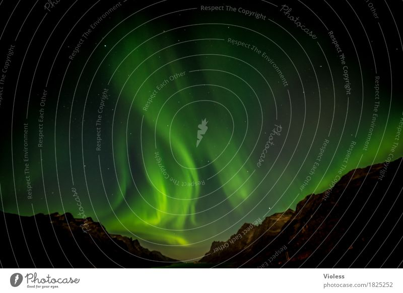 Sky Nature Clouds Autumn Movement Exceptional Horizon Mysterious Infinity Surrealism Norway Night sky Fjord Humble Aurora Borealis