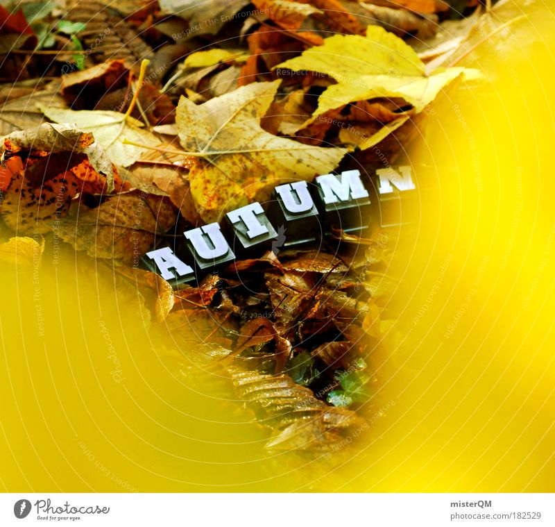 Nature Plant Leaf Landscape Autumn Art Time Weather Exceptional Design Characters Esthetic Ground To go for a walk Search Uniqueness