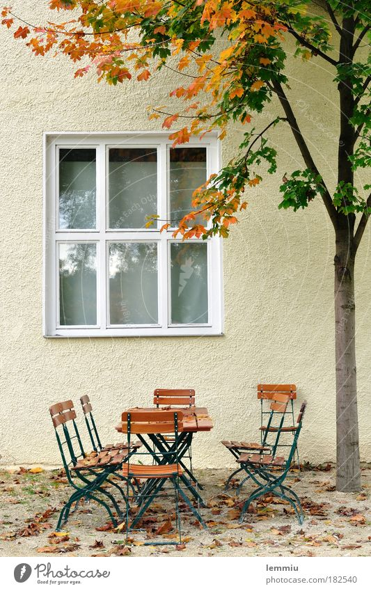 Nature Tree Loneliness Calm House (Residential Structure) Window Wall (building) Autumn Wall (barrier) Garden Time Idyll Nutrition Table Tree trunk Chair
