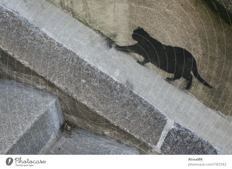 CATWALK Art Wall (barrier) Wall (building) Stairs Cat Stone Graffiti Town Gray Black Street art Stencil Creep Free-living Prowl Street cat Colour photo