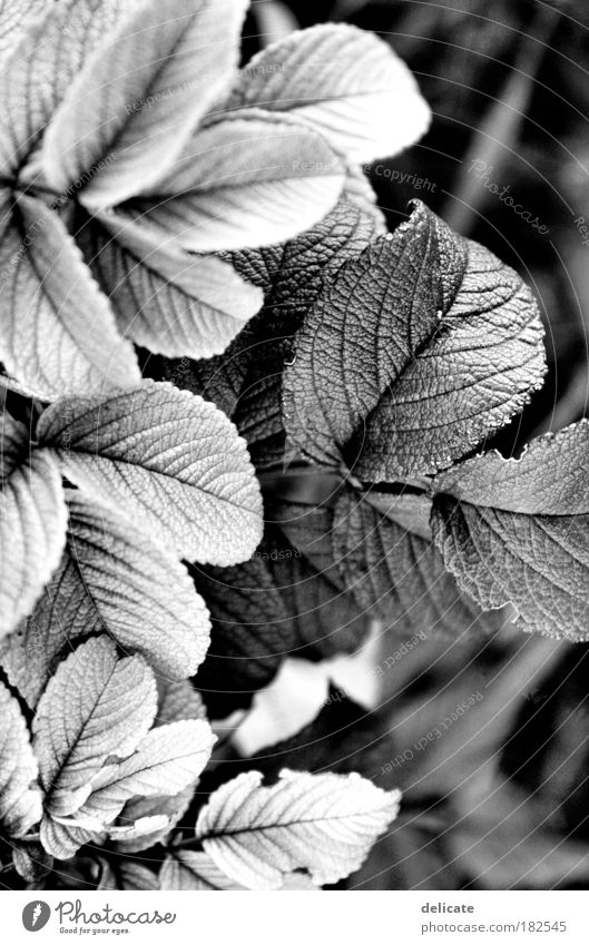 Light/Dark Black & white photo Exterior shot Detail Deserted Contrast Nature Plant Observe To dry up Growth Transience