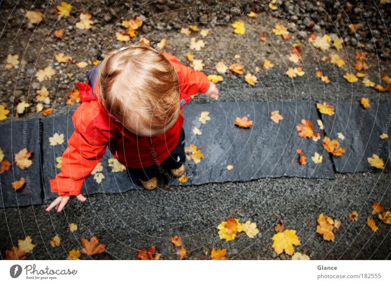 little man in autumn Colour photo Exterior shot Copy Space right Day Bird's-eye view Playing Human being Masculine Toddler 1 1 - 3 years Autumn Leaf Jacket