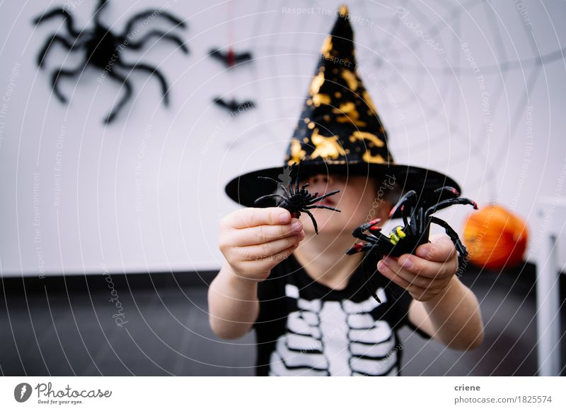Toddler with halloween costume and spider toys at home Human being House (Residential Structure) Animal Joy Autumn Lifestyle Boy (child) Playing Fear Decoration