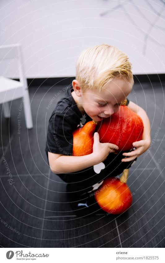 Little toddler boy carrying pumpkins for halloween at home Child Joy Autumn Lifestyle Boy (child) Playing Infancy Smiling Vegetable Home Toddler Carrying
