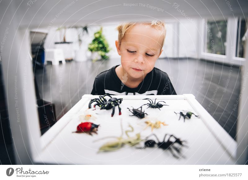 Caucasian little boy playing with spider toys at home Human being Child Animal Joy Lifestyle Boy (child) Playing Small Room Growth Infancy Smiling