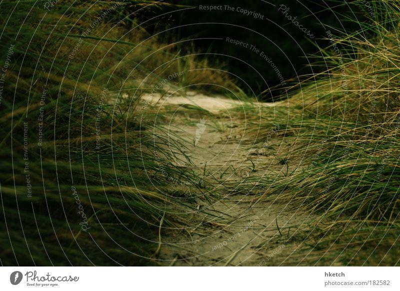 Nature Green Plant Summer Beach Meadow Grass Happy Sand Contentment Coast Hope Curiosity Expectation Endurance