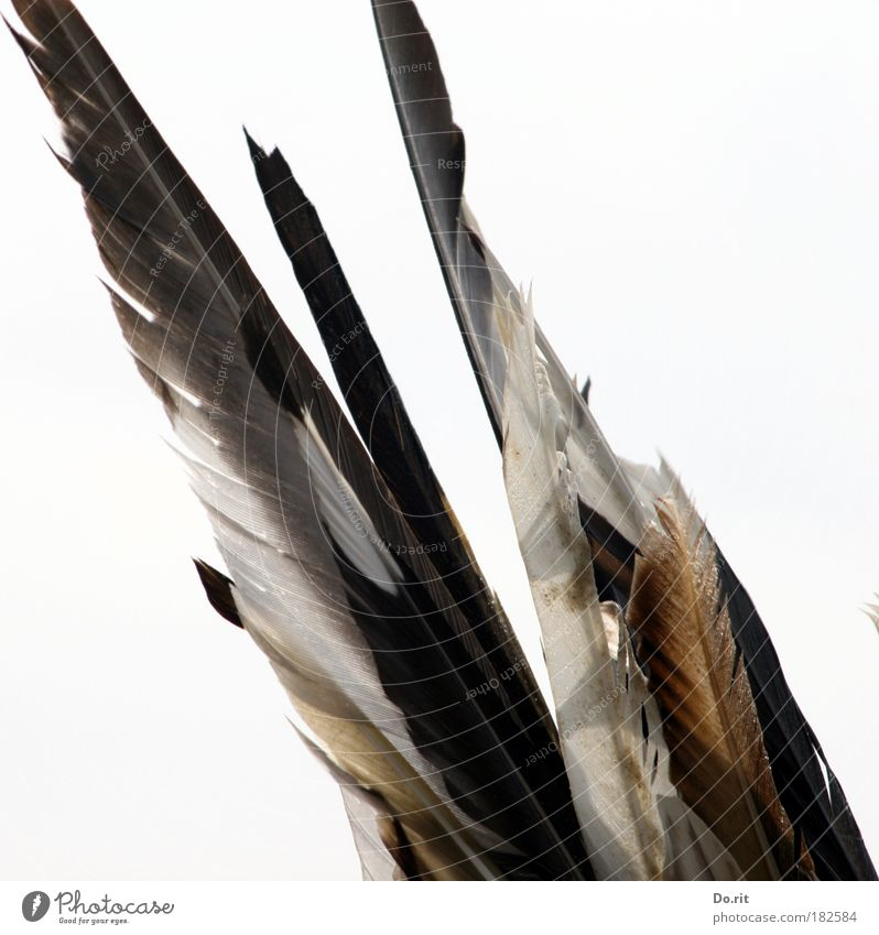 Nature White Gray Contentment Brown Esthetic Feather Jewellery North Sea Accessory Native Americans Feather headdress