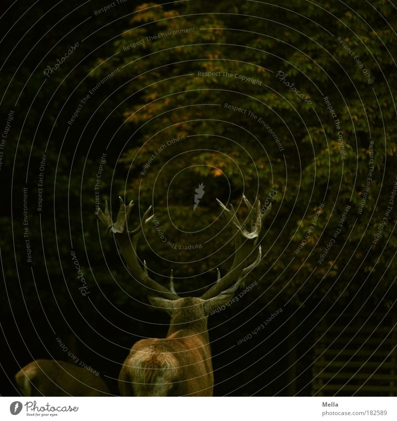 Nature Tree Calm Animal Forest Dark Autumn Moody Brown Together Power Environment Might Stand Kitsch Protection